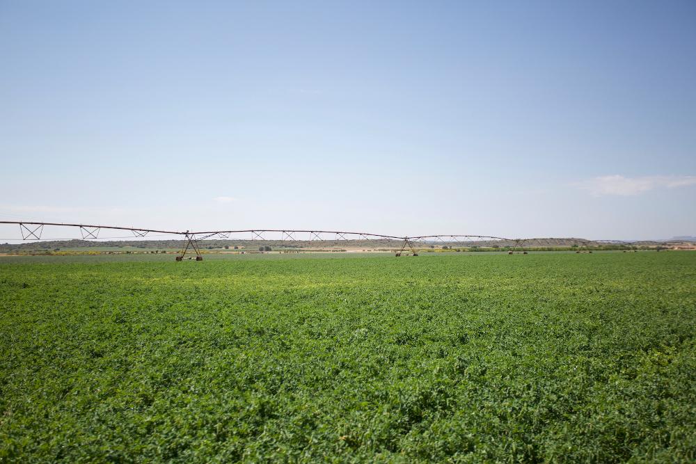 cultivos dehesa de los llanos
