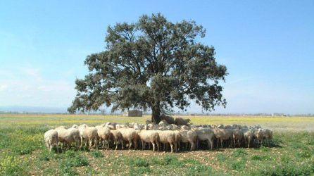 ¿Conoces el secreto de Dehesa de Los Llanos para producir el Mejor Queso del Mundo?