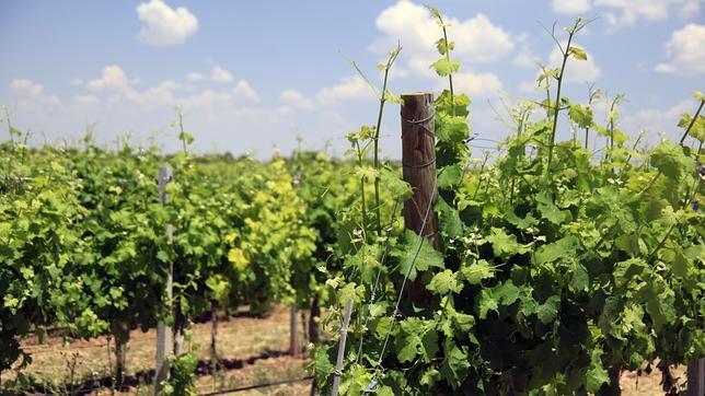 El Mazacruz Tinto 2012 triunfa en los International Wine Challenge
