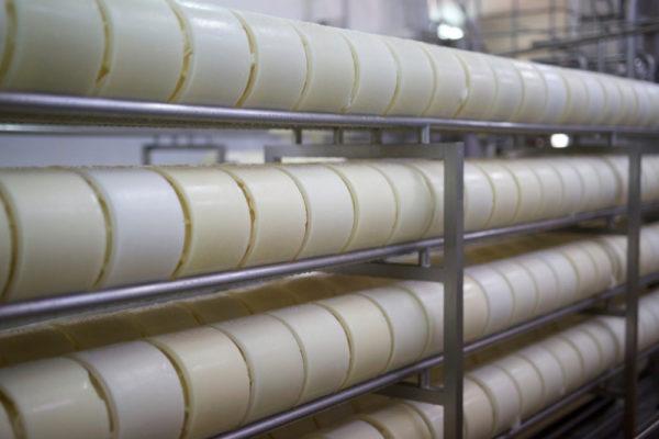 queso artesano de leche cruda