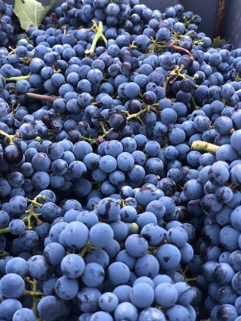 ¿Cómo se hace el vino de Dehesa de Los Llanos?