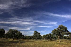 Finca Dehesa de Los Llanos